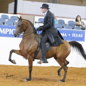 <span>Vegaz Style CCF<br/>Merlot CSP, by Mamage<br/>2008 Purebred Mare