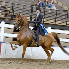 <span>Royal Flush SKF<br/>Hillcroft Princess Royal<br/>2008 Half-Arabian Gelding