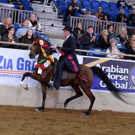 <span>Tommy Bahama PF<br/>A Blessing<br/>2010 Bay Gelding